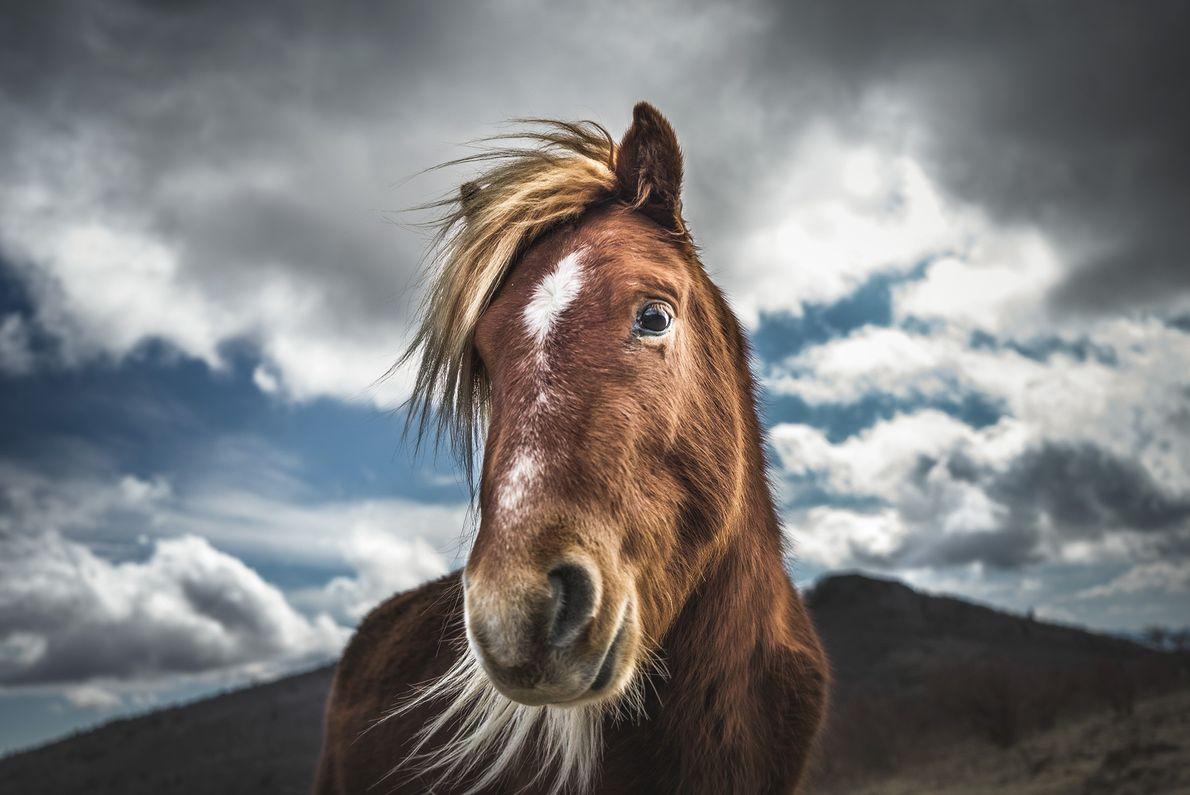 Foto de un pony salvaje en Virginia