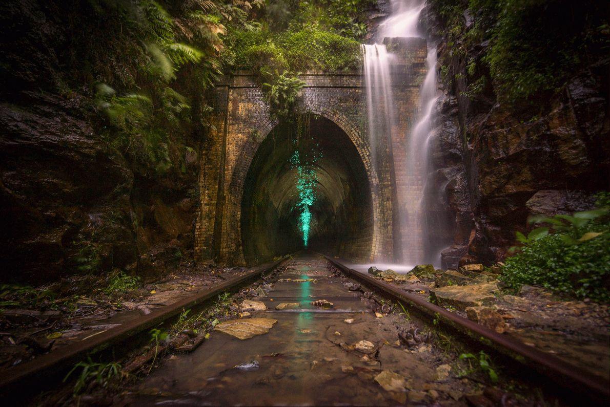Imagen de organismos bioluminiscentes iluminando un túnel de tren abandonado en Australia