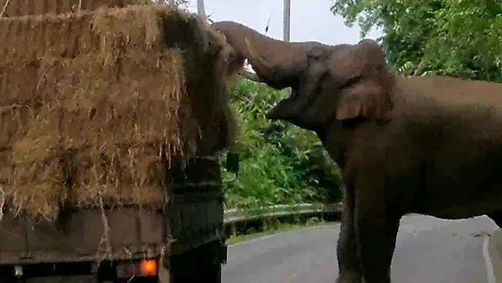 """¿Qué harías si un elefante te """"atracase"""" en medio de la carretera?"""