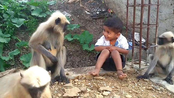 Una amistad peculiar entre unos monos y un niño