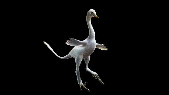 Descubierto un fósil de dinosaurio con aspecto de pato que vivió hace 70 millones de años