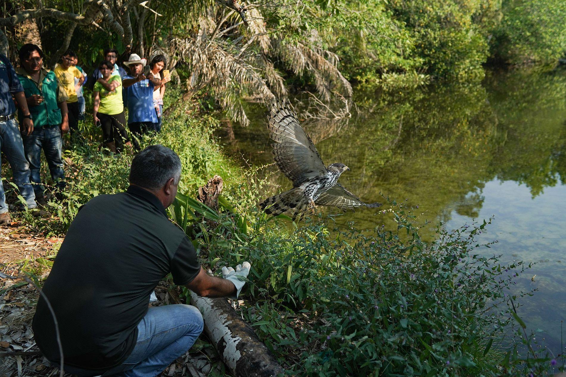 El personal del centro de rescate de Aguas Calientes, junto a las autoridades del gobierno, ponen ...