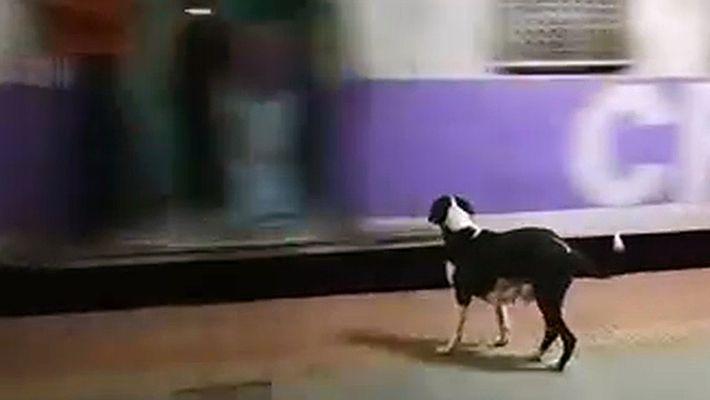 Cada noche, esta perra espera en vano a que llegue el mismo vagón de tren