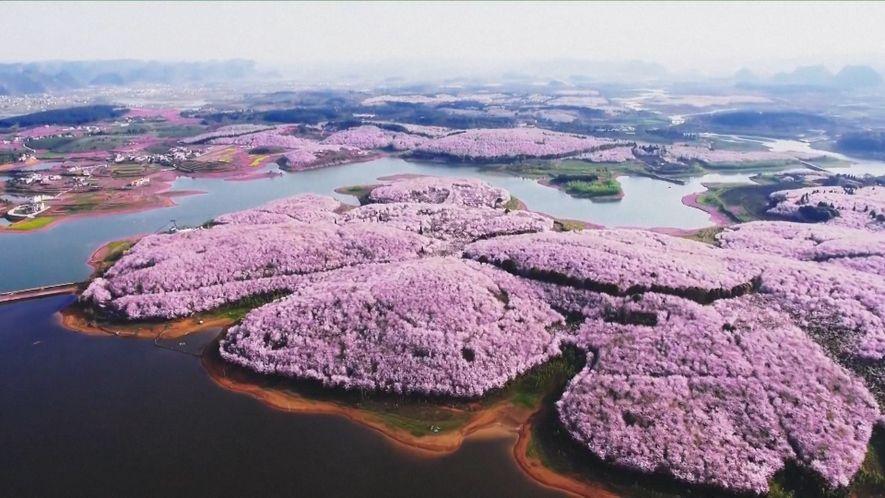 Hermosas flores de colores anuncian la llegada de la primavera en China