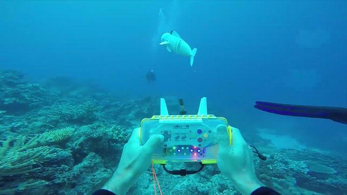 Este pez robótico podría hacer avanzar la investigación marina