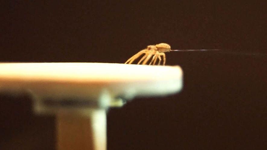 "Estas arañas fabrican ""paracaídas"" de seda para volar"