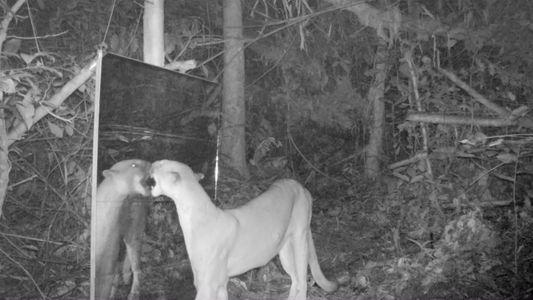Los animales del Amazonas descubren sus reflejos en el espejo