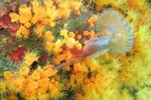 180731_Coral_Eats_Jellyfish_ES~~~~~es~mux~~1.JPG