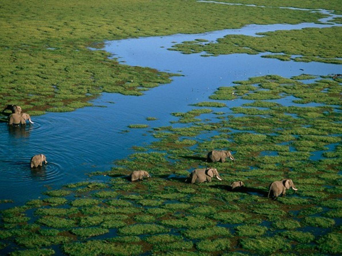 Reserva Nacional de Amboseli