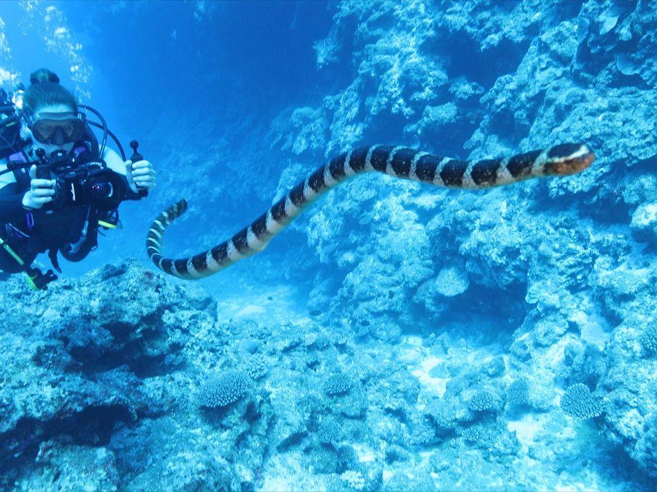 Jess Cramp nos explica cómo protege una reserva de tiburones