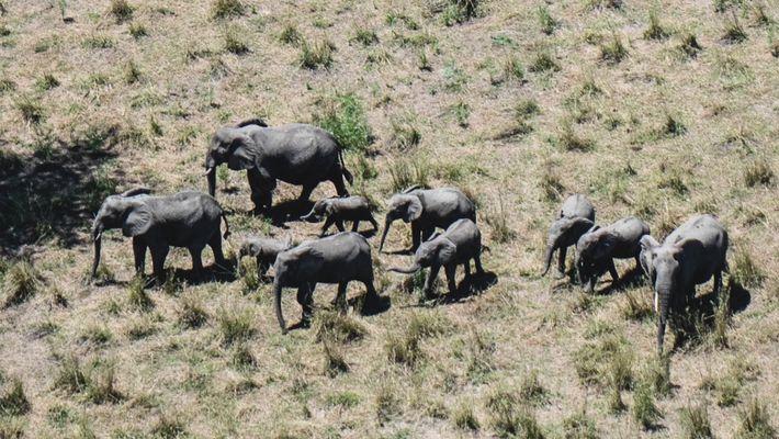 Así se ha recuperado de la guerra civil la fauna de Gorongosa