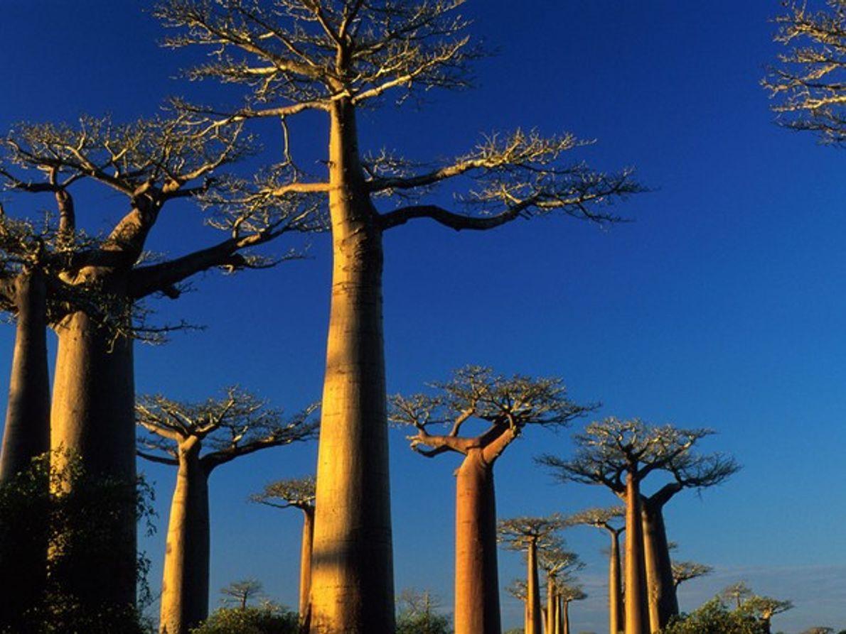 Descubre Madagascar