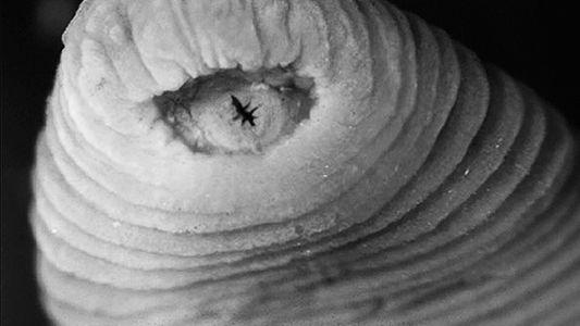 Los 10 animales más raros del Mundo