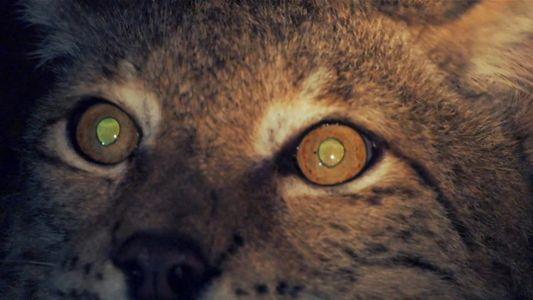 ¿Qué animales tienen visión nocturna?