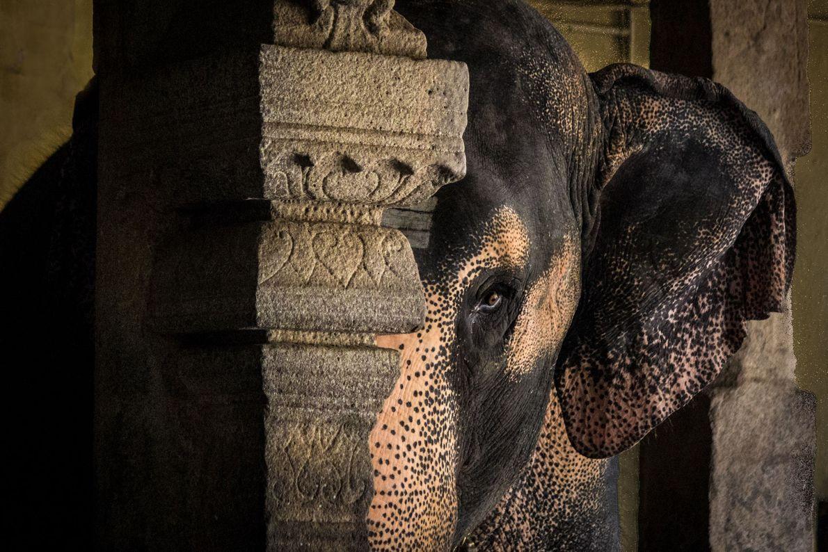 Elephant. Tamil Nadu, India