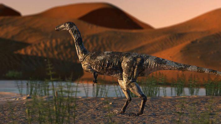 El pie de un nuevo dinosaurio es el fósil de terópodo mejor conservado de Brasil