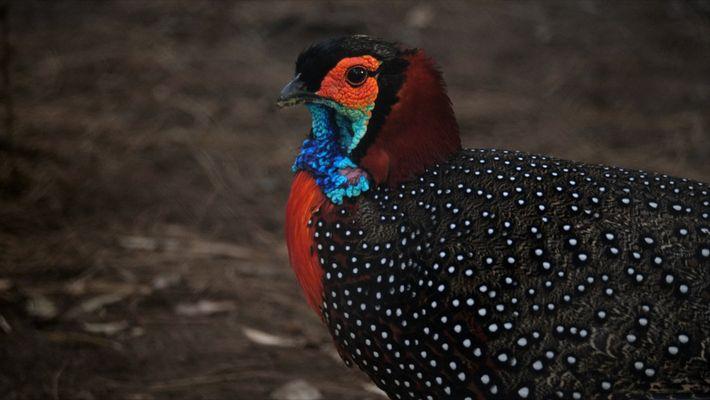 """Así intentan salvar al """"rey de las aves"""" en este parque de la India"""
