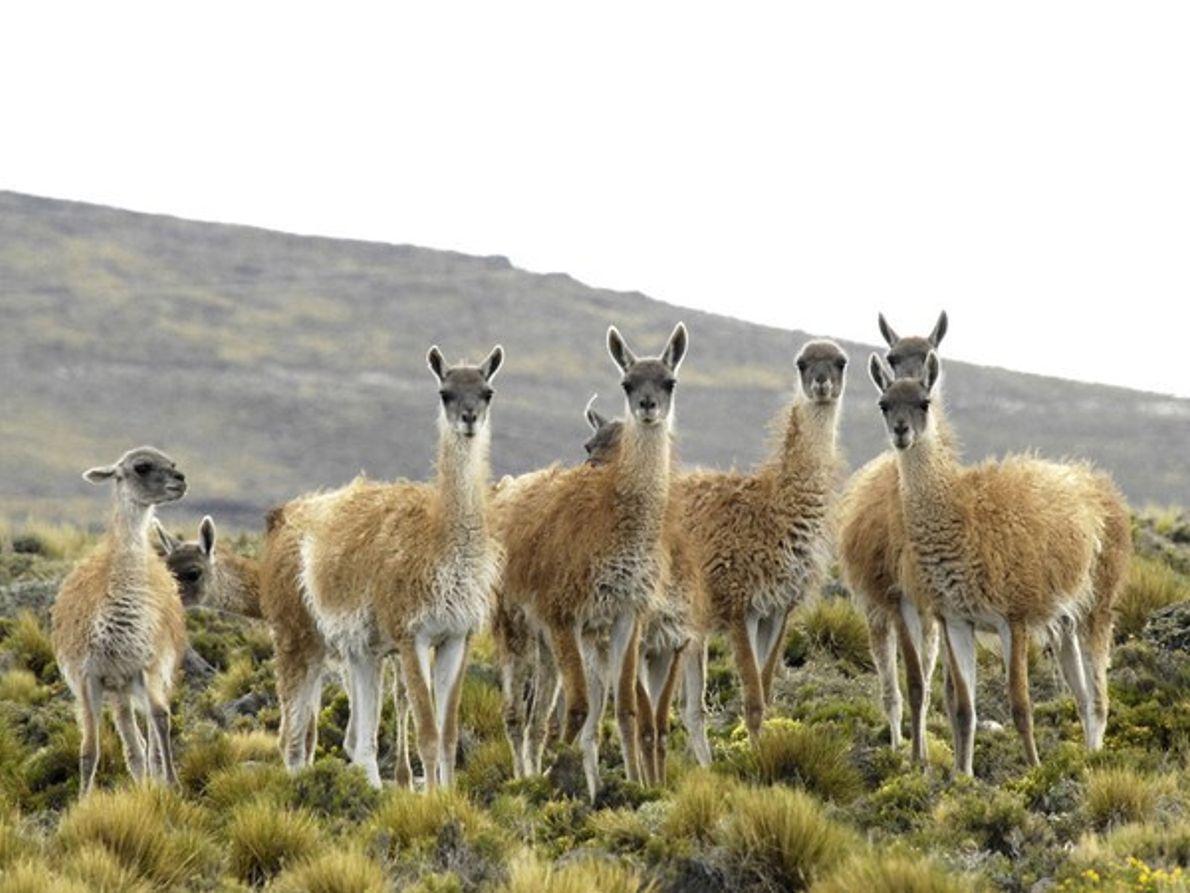 Descubre la vida salvaje de la Patagonia