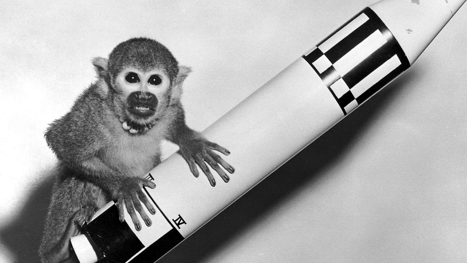 El mono ardilla Baker