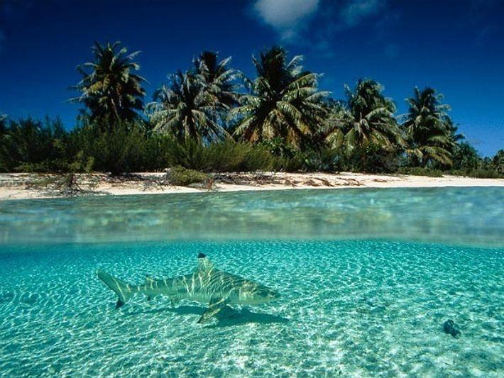 Tiburón en la Polinesia francesa