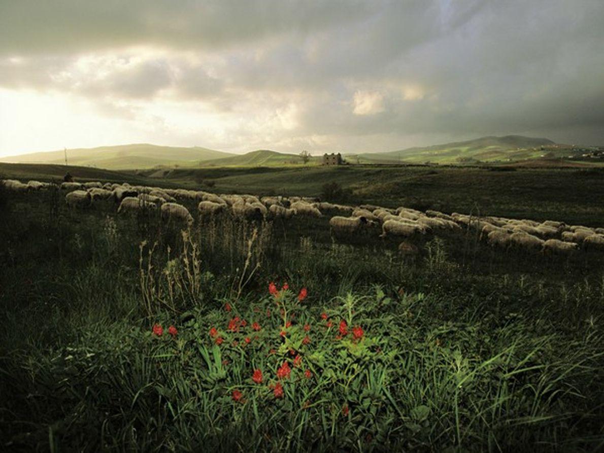 Agricultura siciliana