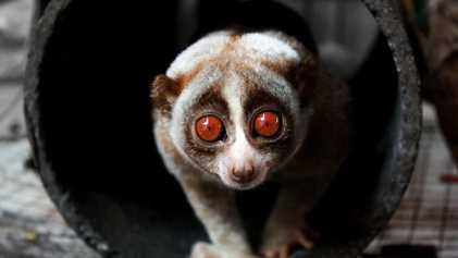 30 fotografías de los animales más lentos del planeta