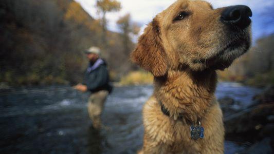 Los perros son más inteligentes de lo que pensamos