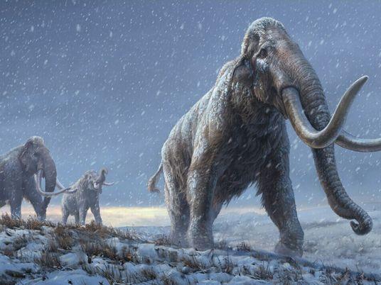 Hallan en dientes de mamut de un millón de años el ADN más antiguo del mundo