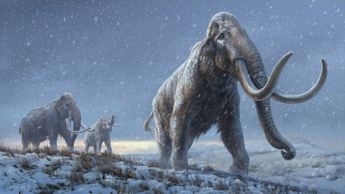 Mamuts de la estepa