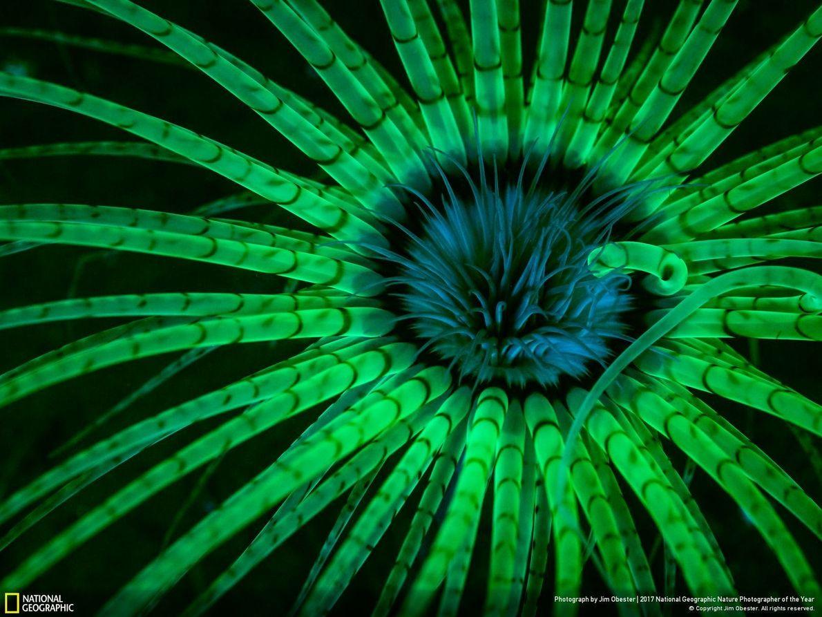 Primer puesto - Fotografía subacuática