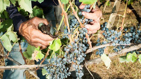 La elaboración del vino en Georgia