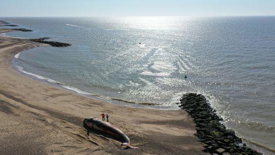 Un rorcual varado en la orilla en Holland-on-Sea