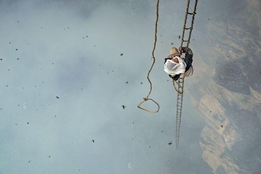 Mauli Dhan sube por una escalera de cuerda de bambú de 30 metros para llegar hasta ...