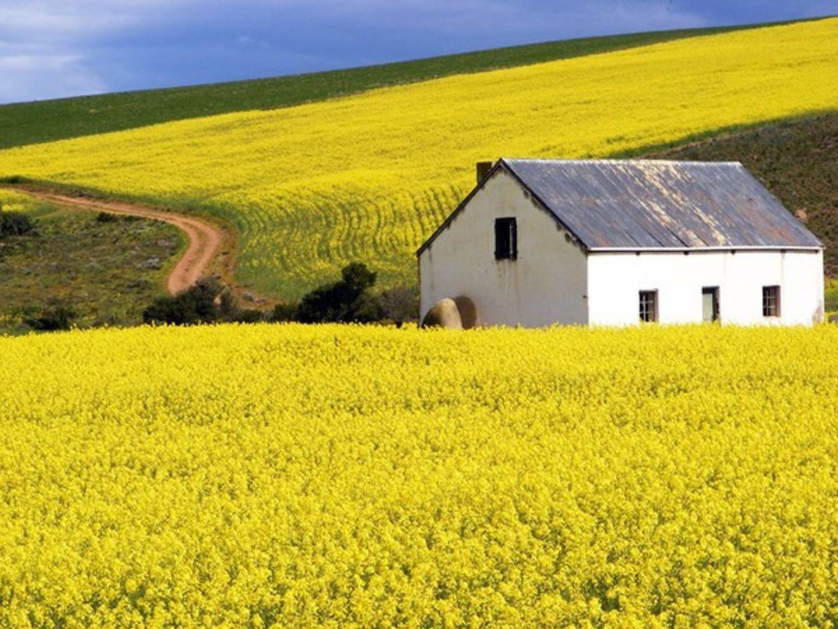 Descubre Sudáfrica y sus múltiples caras.