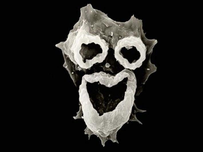 Las estructuras de alimentación de la ameba Naegleria fowleri tienen una apariencia similar a la cara.