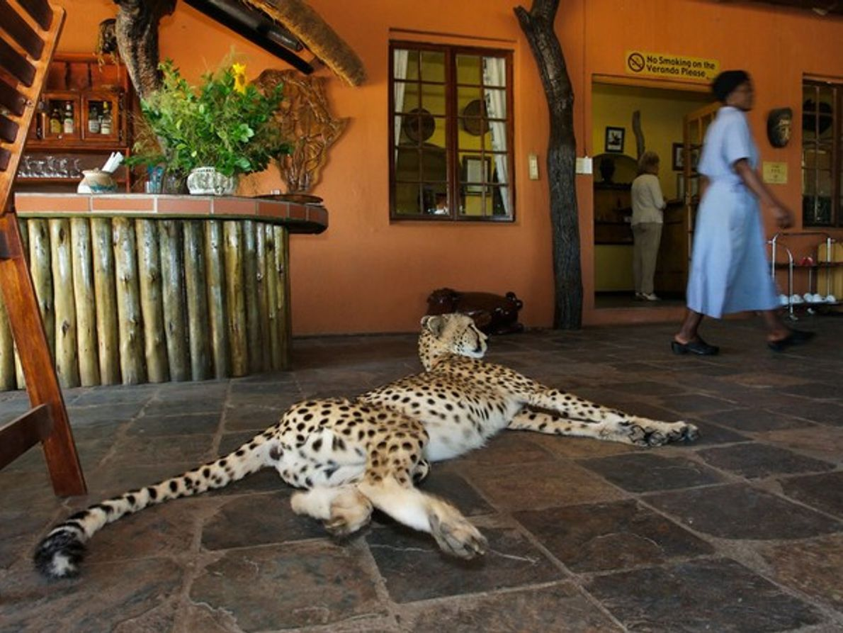 Game Lodge, Provincia de Limpopo
