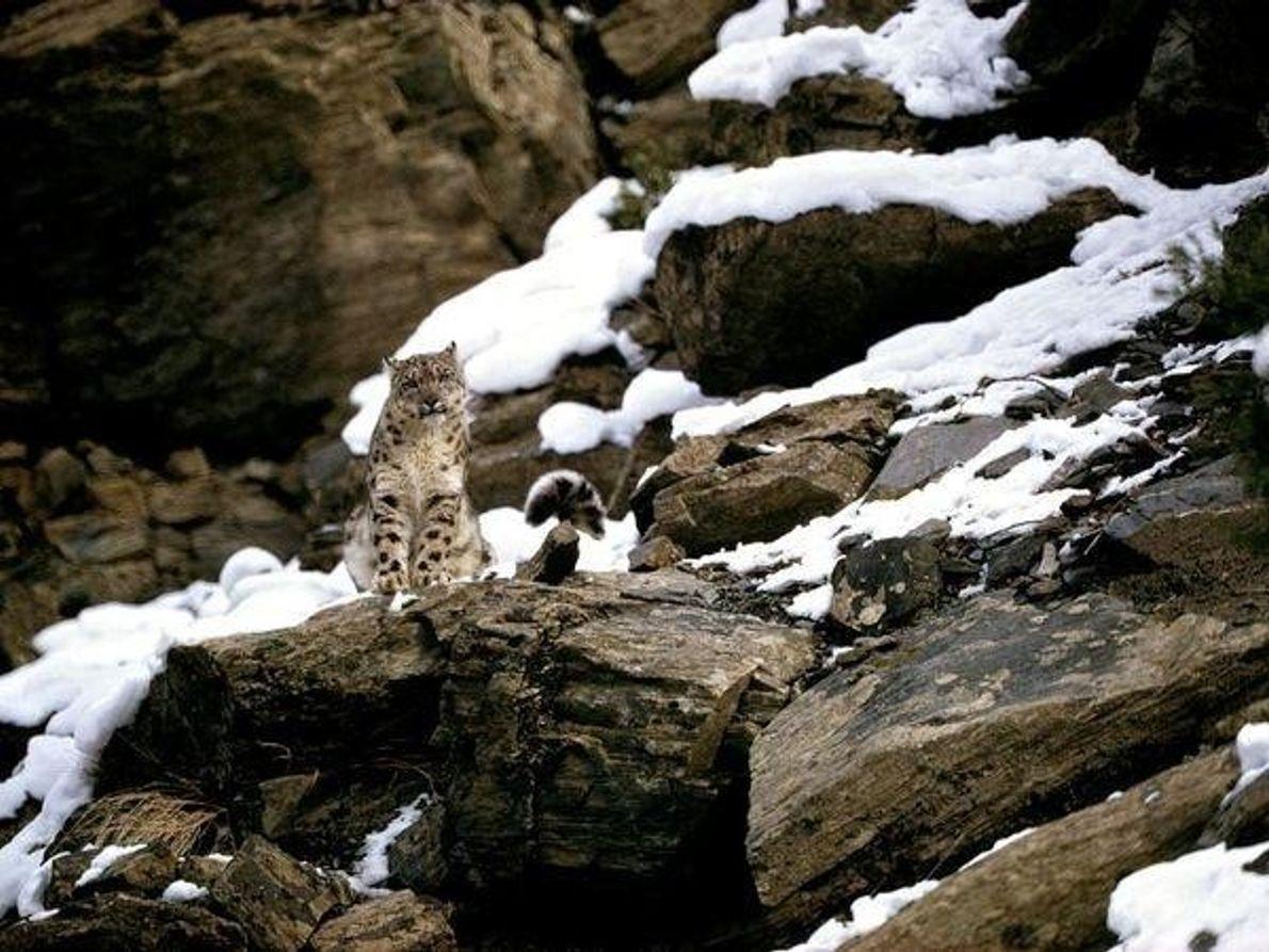Primera foto de un leopardo