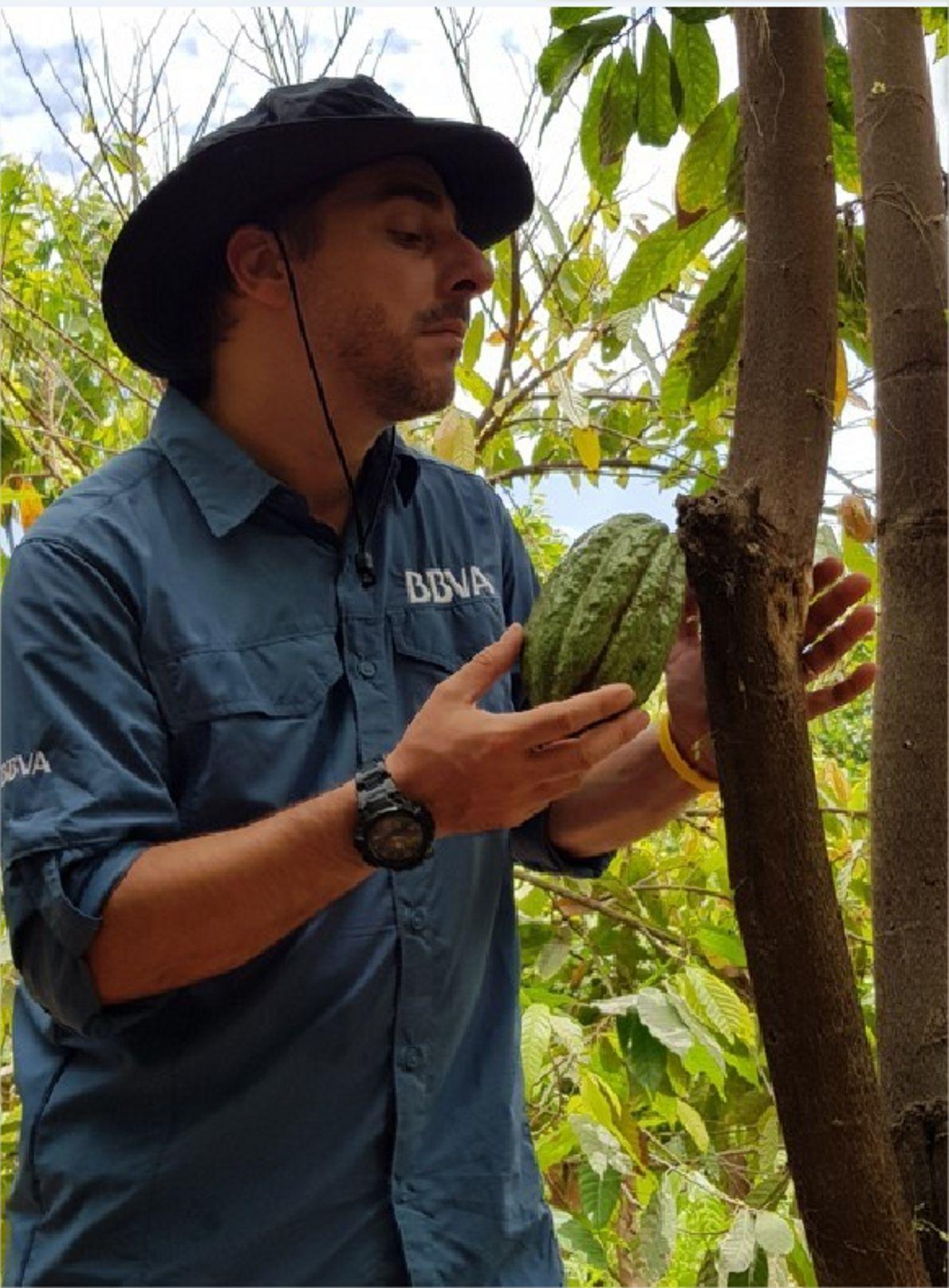 Observando granos de cacao
