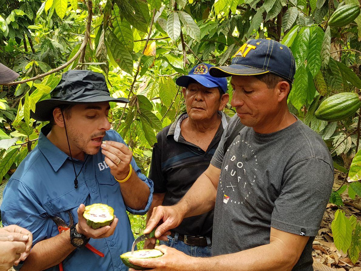 Probando, oliendo y observando fruta de cacao
