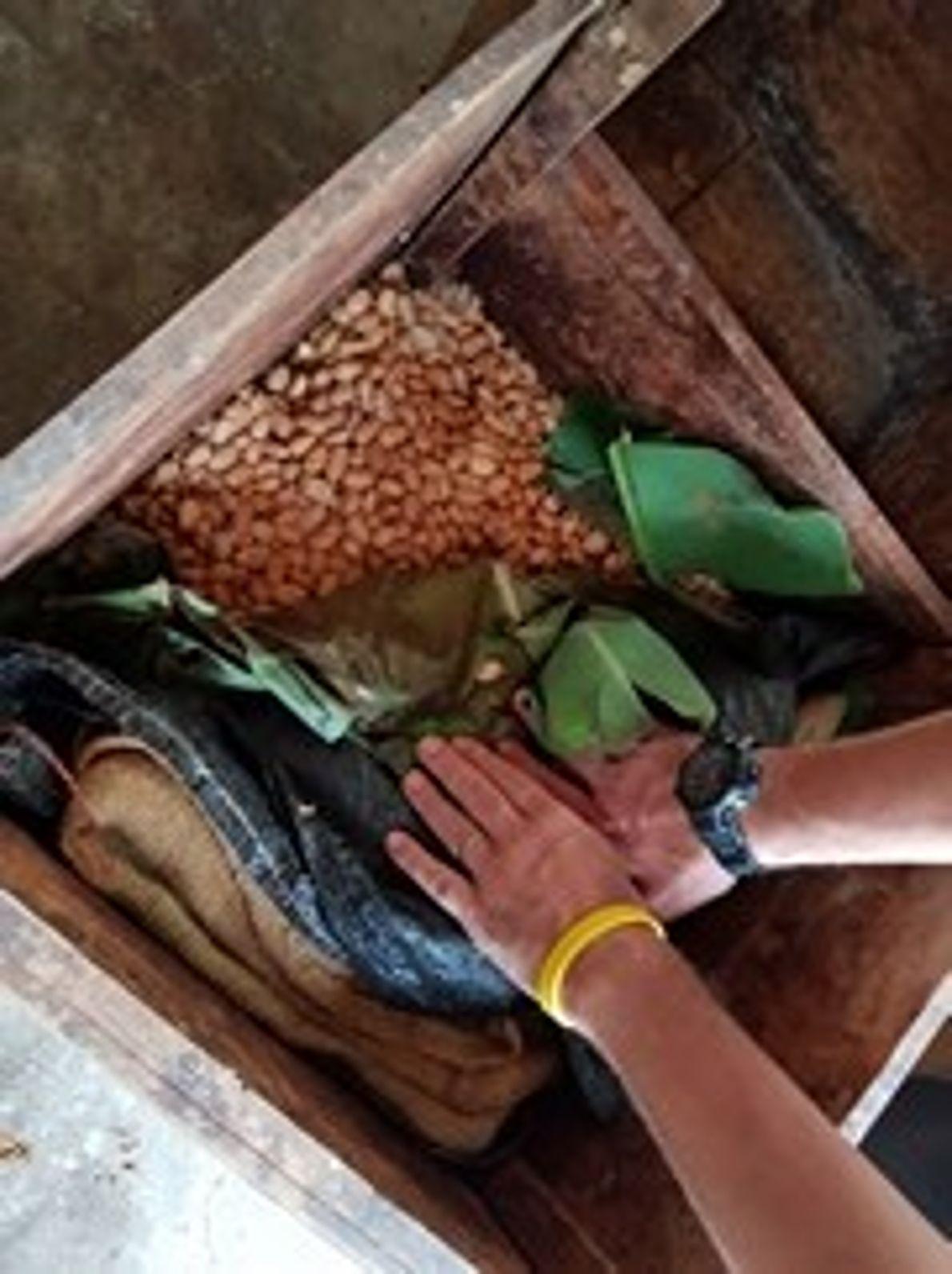Cajón de cacao