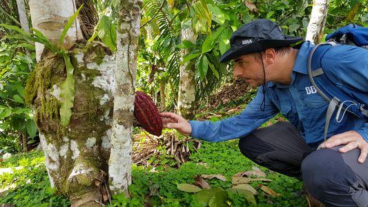 El repostero español Jordi Roca relata su expedición a la Amazonia en busca del cacao «más ...