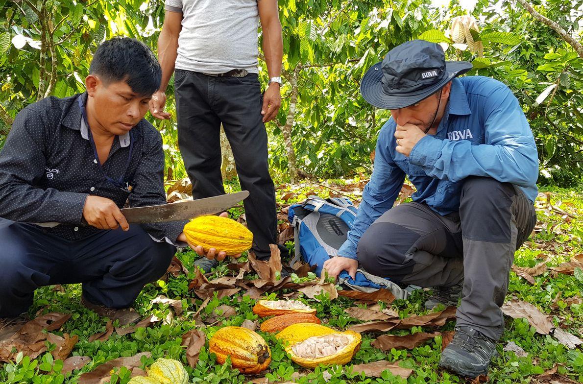 Degustando granos de cacao