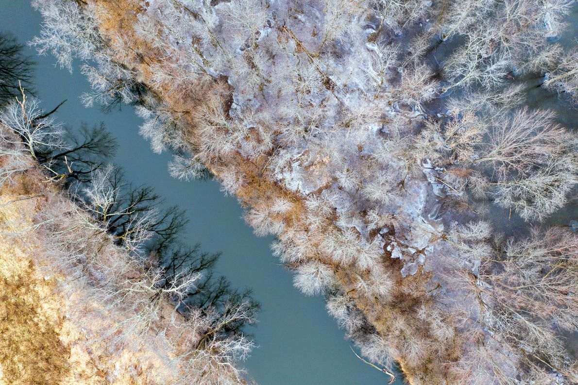 Árboles junto al arroyo Otter