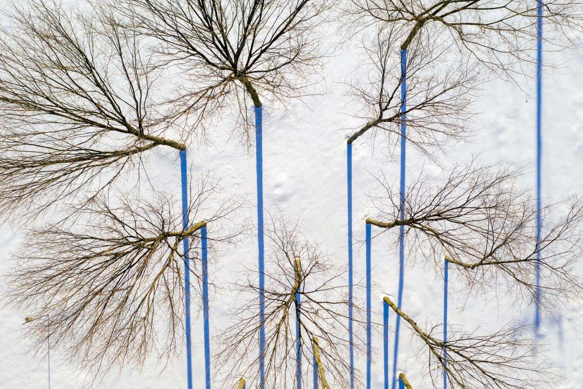 Árboles cerca de Sudbury
