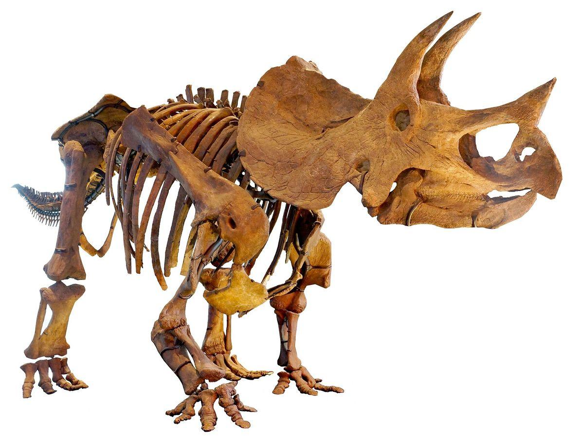 Fósil dinosaurio