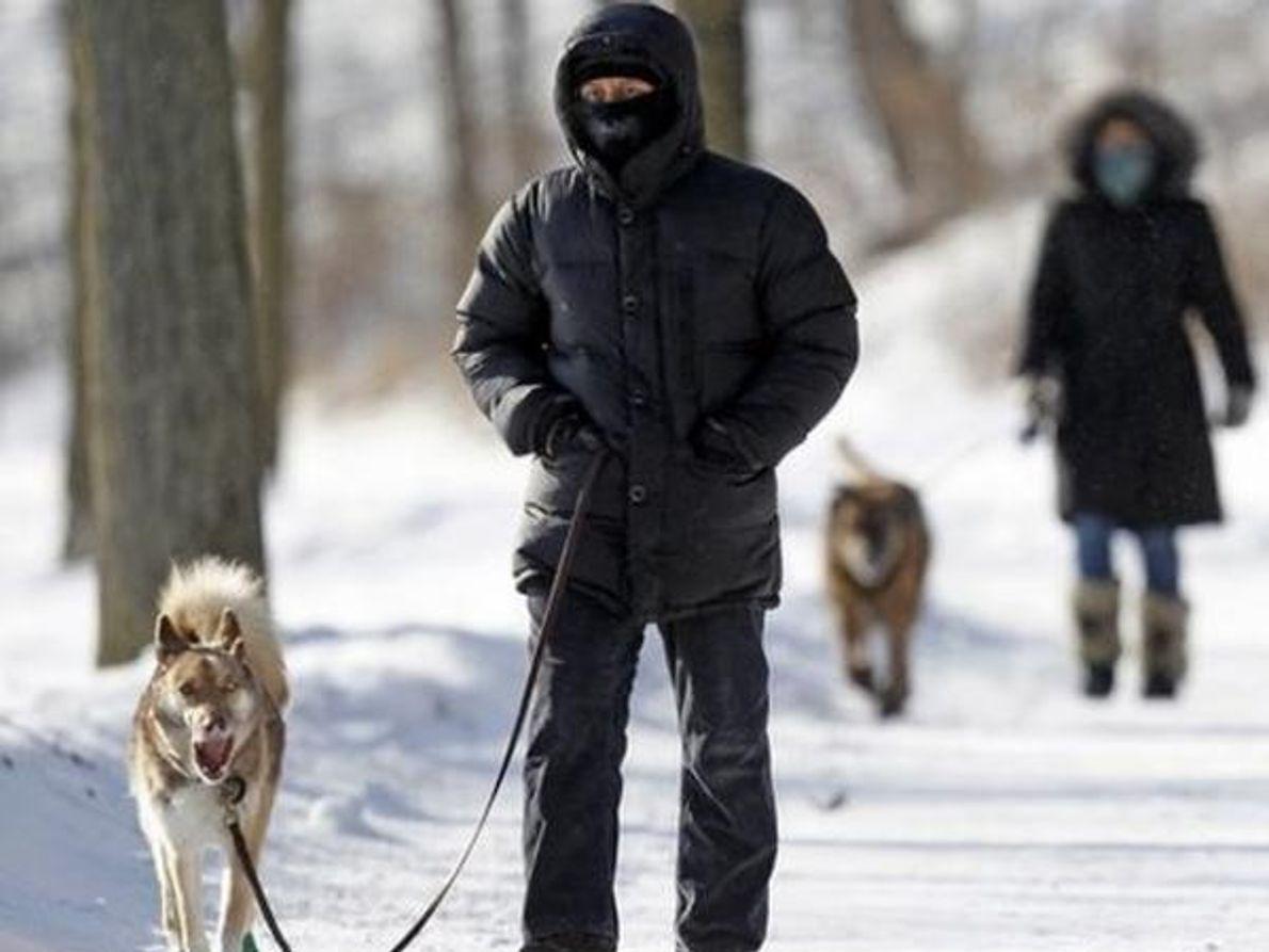 Cuidado con los perros