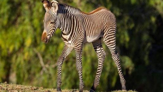 Bebés nacidos en zoológicos