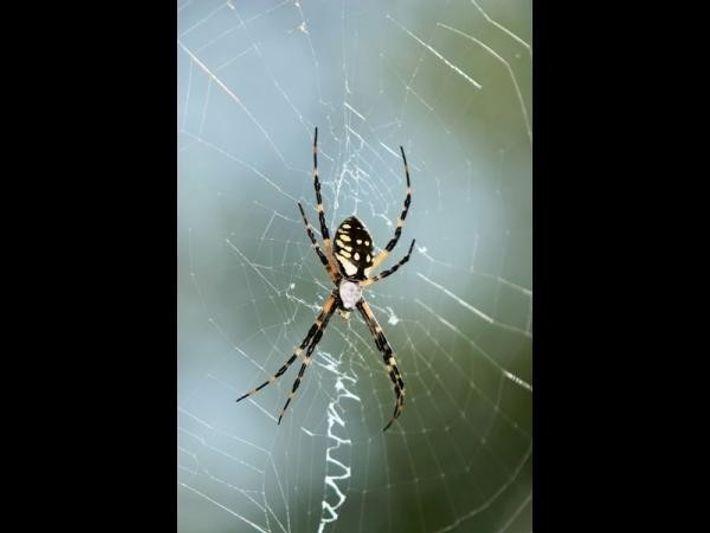 Una araña en su telaraña.