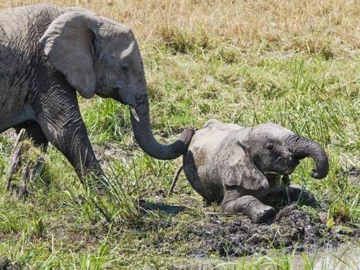 Un elefante africano juega con un cachorro en la Reserva Nacional Masai Mara, en Kenia.
