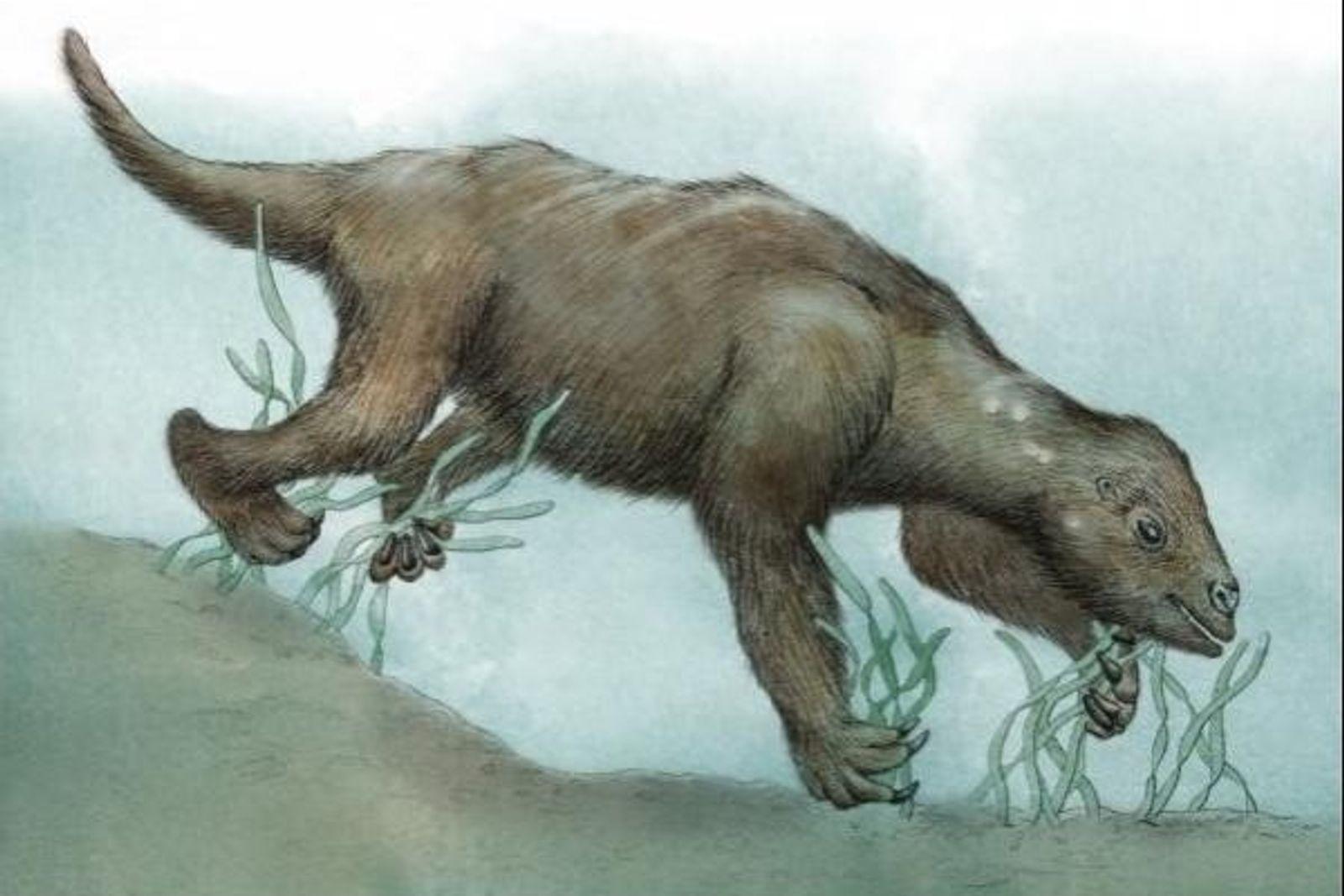 Un antiguo perezoso en el fondo marino.